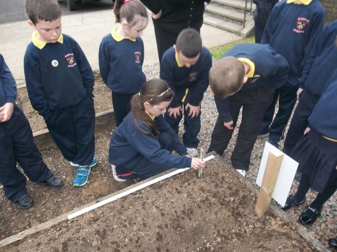 Measuring out spaces for our plants