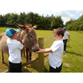 The donkeys enjoyed being fed grass...