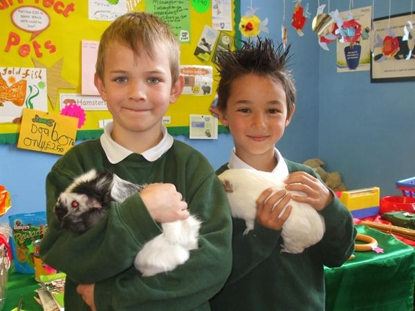 Pets in School