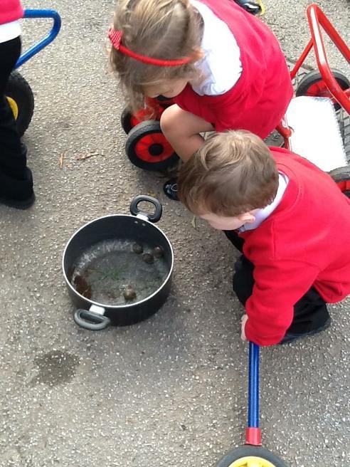 We found snails!!!