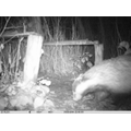 The Badgers don't live on site