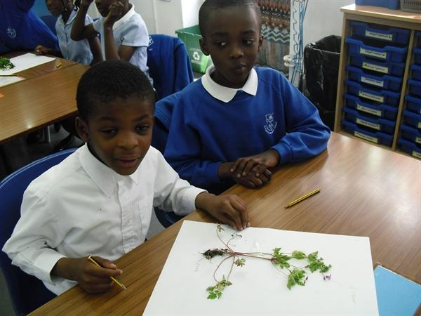 Identifying the parts of a plant.