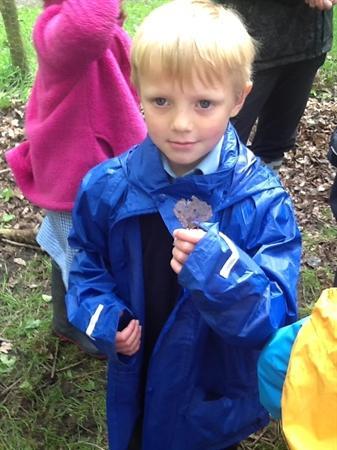 We found some skeleton leaves!