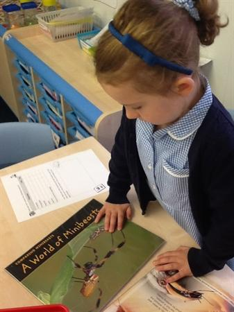 Learning about caterpillars using non-fiction book
