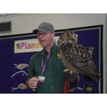 Elsie - European Eagle Owl