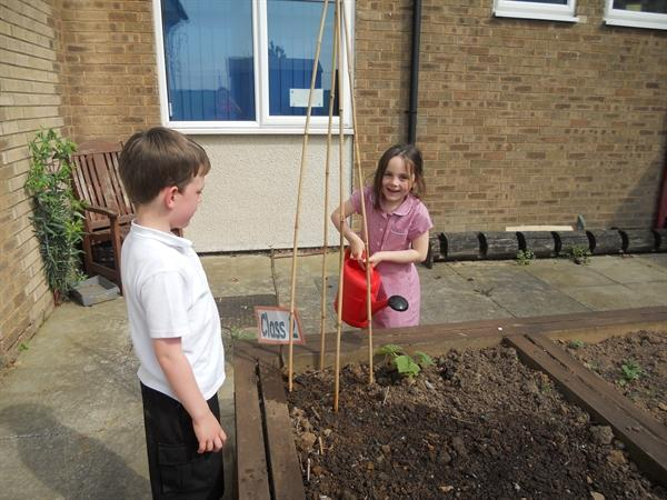 We are enjoying planting in our veg plot