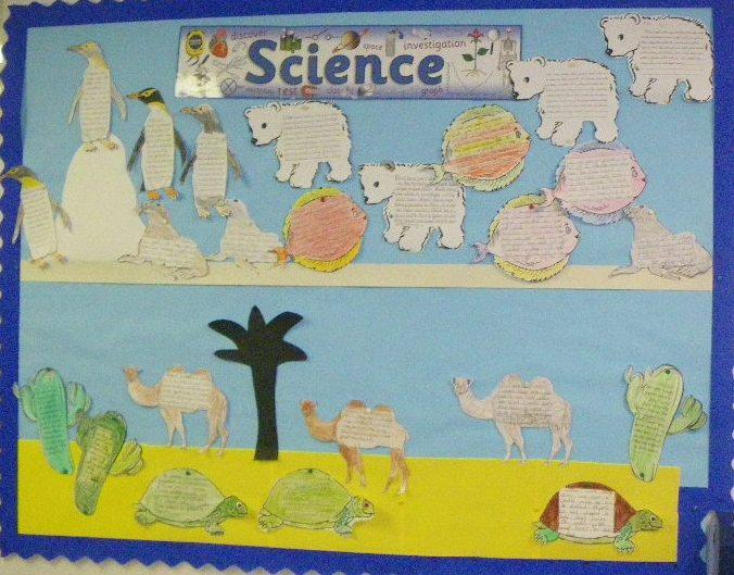 Year 4 Science Board - Adapting to the Environment