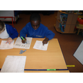 Domino Number Patterns- Marcus