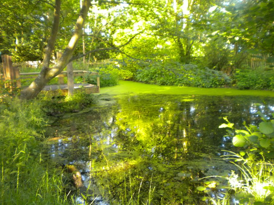 The pond in Plantation Wood