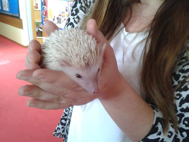 We all met  Ivan the Terrible-  Miss Wilkinson's African Pygmy Hedgehog! Isn't he cute?