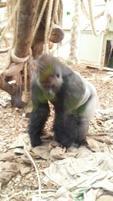 London Zoo 7