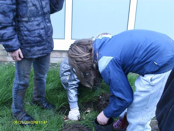Planting bulbs kindly donated