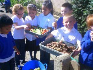 Our wonderful produce!