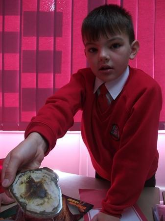 Children's fossil collections