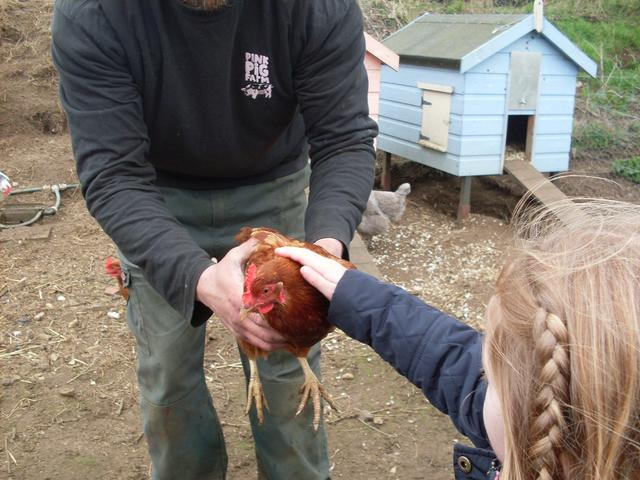 Stroking the chickens.
