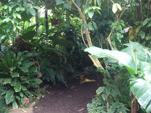 Rainforest rambles