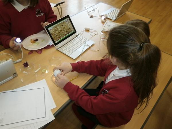 Enjoying our microscopes and tablets