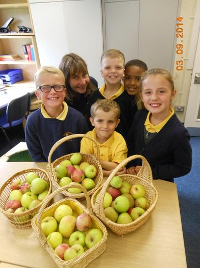 We shared apples between the classes for tasting.