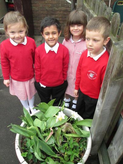 We found flowers growing