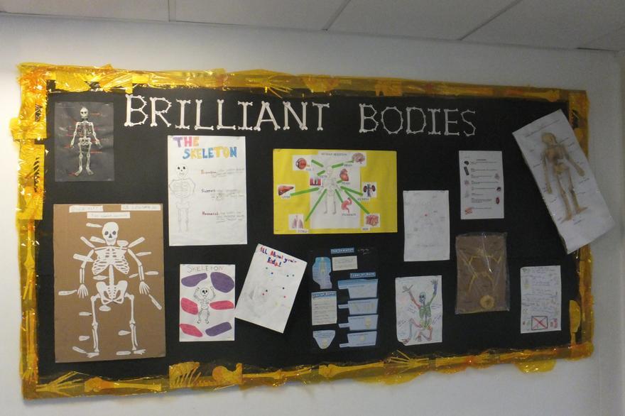 Science display Y3