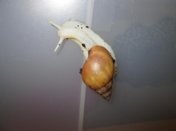 Sid the snail