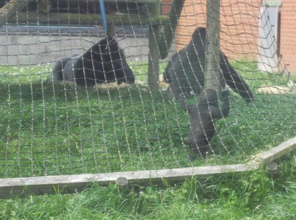 Year 6 at Twycross Zoo!