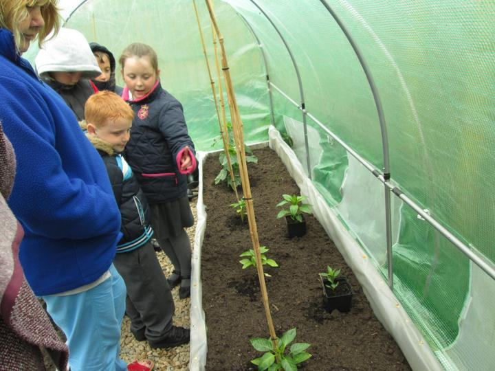 Learning new facts about how fruits grow.