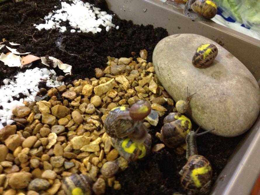 The snail race.