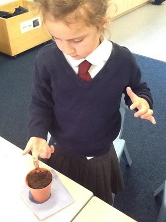 Planting sunflower seeds!