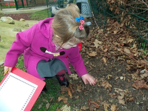 Searching for mini beasts in our sensory garden.