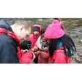 Looking at creatures we found in the river