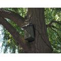 Our outdoor birdcam!