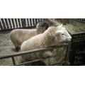 We met some friendly sheep