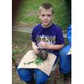 Meet Teddy the guinea-pig