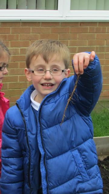 Matthew was amazed by the length of the root.