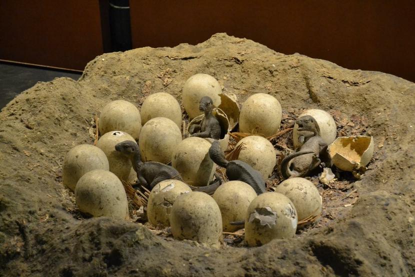Some hatching dinosaur eggs