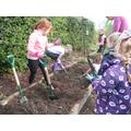 Digging in garden club.