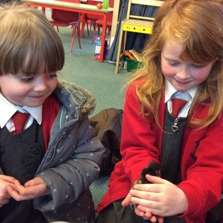Our eggs have hatched!