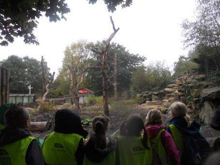 October 2013 - Twycross Zoo - Healthy Eating & Teeth - Year 3 3