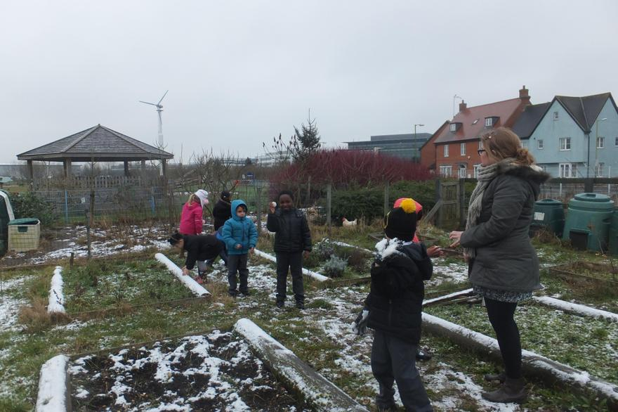 Outdoors in the vegetable patch