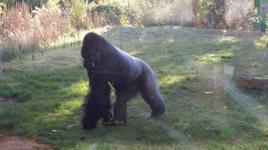 London Zoo 6