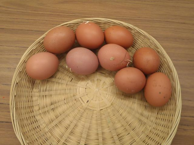 Wow, our chickens have been so busy!!