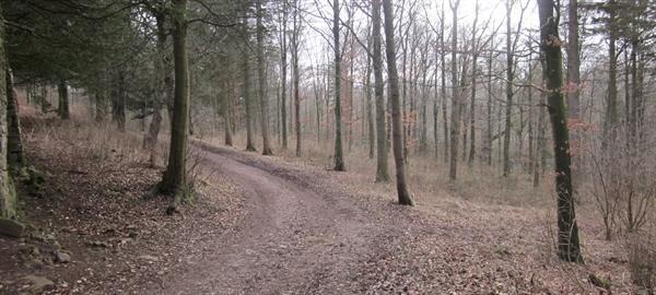 Tale Trail Story Stimulus