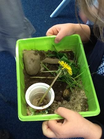 We hope mini beasts will come and live here