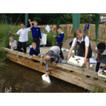 Pond Dipping in June