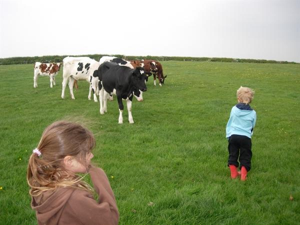 We met and stroked the younger calves