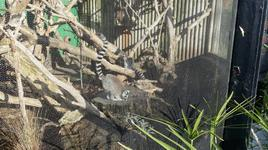 London Zoo 1