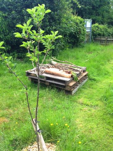 The trees are establishing well.