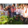 Early Autumn fun in Eco Club 2014