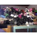 All children were given shoes